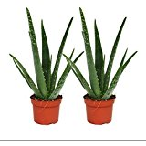 aloevera-amazon