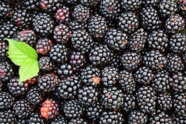 blackberries-1541320_1920