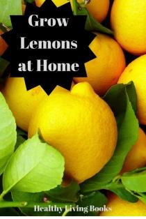 Grow Lemons at Home