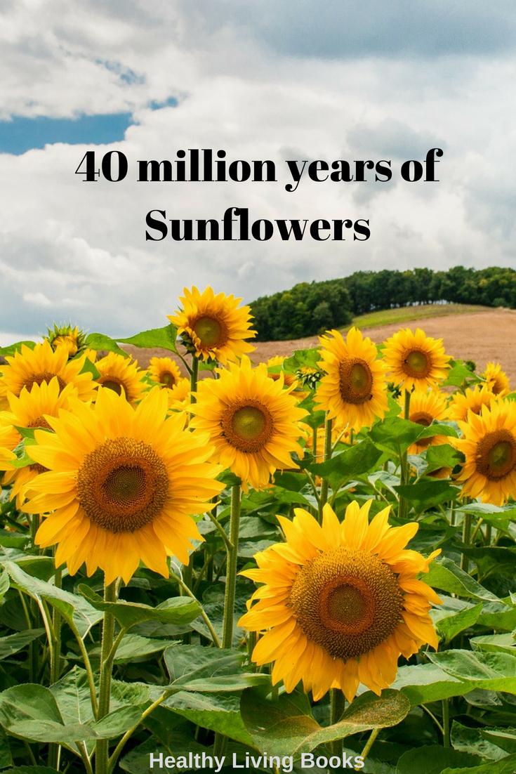 sunflowers-pin