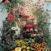 tandm-butterflygarden