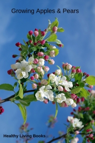 GrowingApplesandPears-pinterest