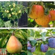 tandmfruit