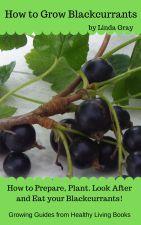 Blackcurrants