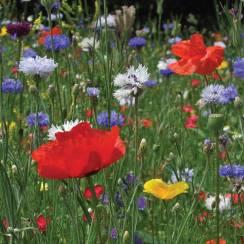 wildflowerseeds