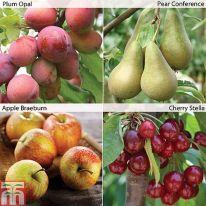 fruittrees-tandm