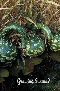 Growinggourds-pin