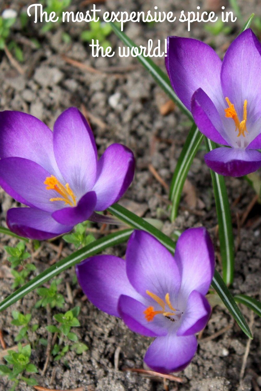 saffron-pin