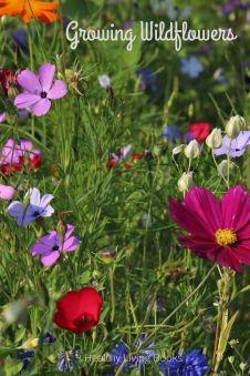 growingwildflowers-pin